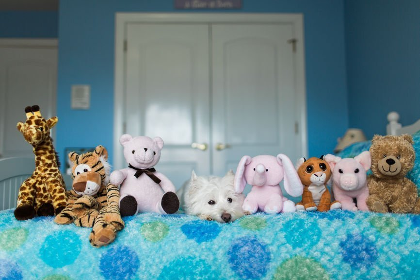 Will Your Child Actually Benefit from Reading with Stuffed Animals?
